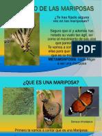 El Mundo de Las Mariposas3