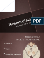 Mesencefalo Anatomia