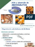 clase-digestion-y-absorcion-de-carbohidratos.pdf