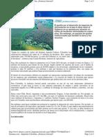 Colombia, Potencia forestal