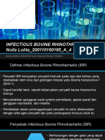 Infectious Bovine Rhinothracheitis