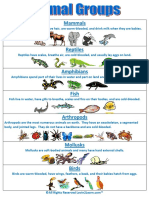 Animal Groups Chart