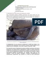 Leptospirosis en porcino.pdf