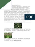 औषिधीय पौधों का महत्व