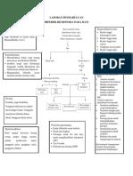 3 LP Hiperbilirubinemia