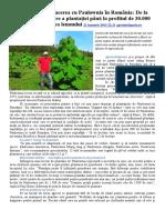 Adevărul Despre Afacerea Cu Paulownia În România