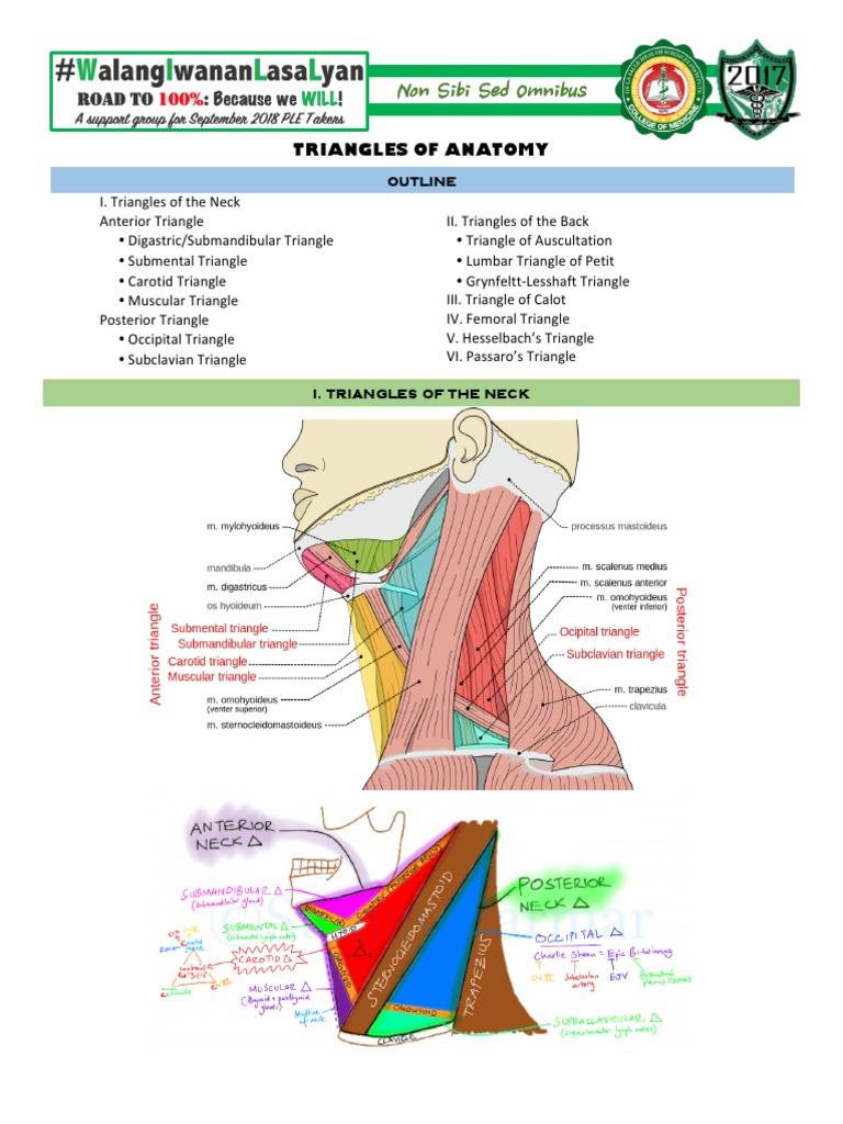 Triangles of Anatomy | Common Carotid Artery | Neck