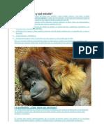Qué Es La Zoología y Qué Estudia