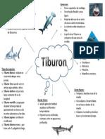 mapa mental del tiburon.pptx