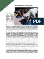 El Problema de Humanizar Al Perro