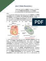 Diferencia entre Célula Eucariota y Procariota.docx