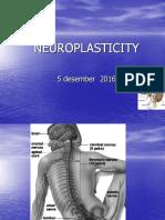 Plastisitas Neurosains (Pertemuan 13)