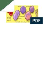 Las Celulas