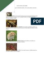 flora y Fauna en El Salvador