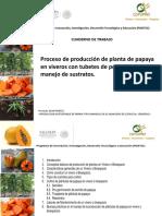 Papaya en Viveros