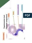 protozoarios uzu.pdf