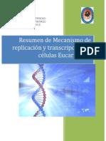 Mecanismo de Replicación y Transcripcion en Eucariontes