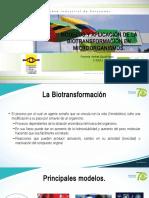 Modelos de Biotransformación