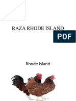 Raza Rhode Island