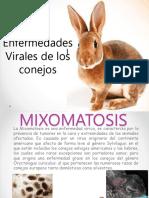 Enf.viricas Conejos
