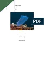 Diversidad Biologica - Modulo 2 - Chordata