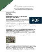 Ofidios Ponzoñosos Del Uruguay