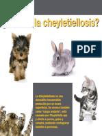 Cheyletiellosis