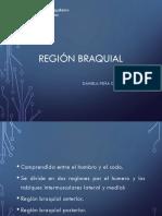 anatomía braquial ppt