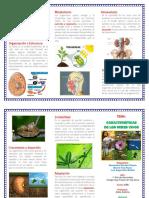 TRIPTICO CARACTERISTICAS.pdf