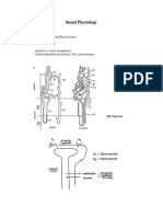 338412820 Renal Physiology PDF