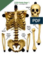 12 Inch Skeleton
