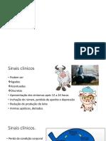 acidose ruminal