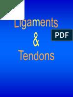 tendon lig.pdf