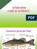 pestisiamfibieni.ppt