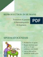 Spermatogenesis,Oogenesis
