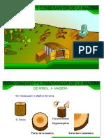 Conocimiento y Conservacion de La Madera