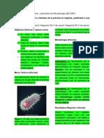 Formato Reporte-Informes Lab Microbiologia USB VMA