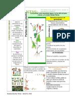 Las Plantas Tabla Dibujada Con Lapiz Docx