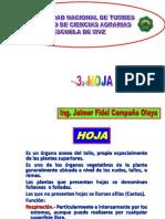 HOJA Y SUS PARTES
