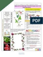 LAS PLANTAS Y Proyectos pedagógicos de aula