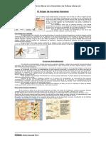 prehistoria-paleolitico.doc