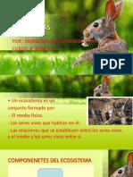 Ppt de Ecosistemas Listos