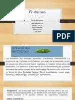 protozoos microbiologia