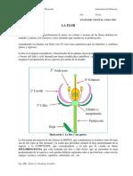 Guia Flor I-18
