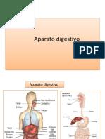 Aparato Digestivo Genito Urinario Maculino y Femenino