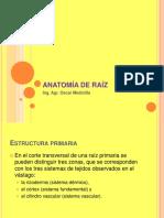 Anatomía de Raíz