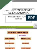 Uniones Celulares y Microvellosidades