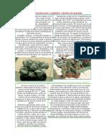 159494247-Cultivo-Reproduccion-Cuidados-Injertos-de-Cactus.pdf