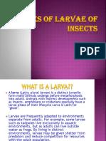 Types of Larva