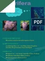 Porifera 2